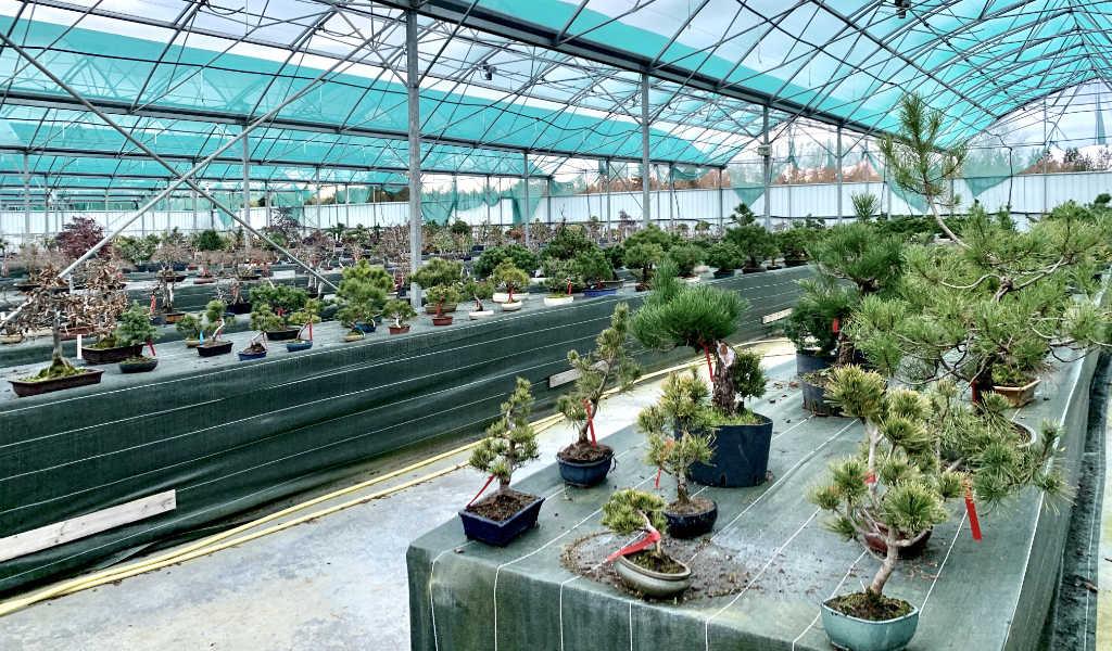 Nouvel espace de vente de bonsaï à la pépinière