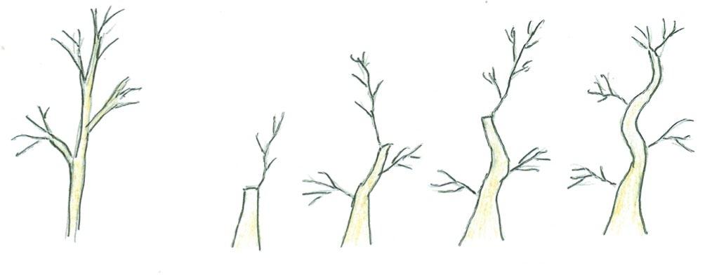 Former un tronc par le clip and grow