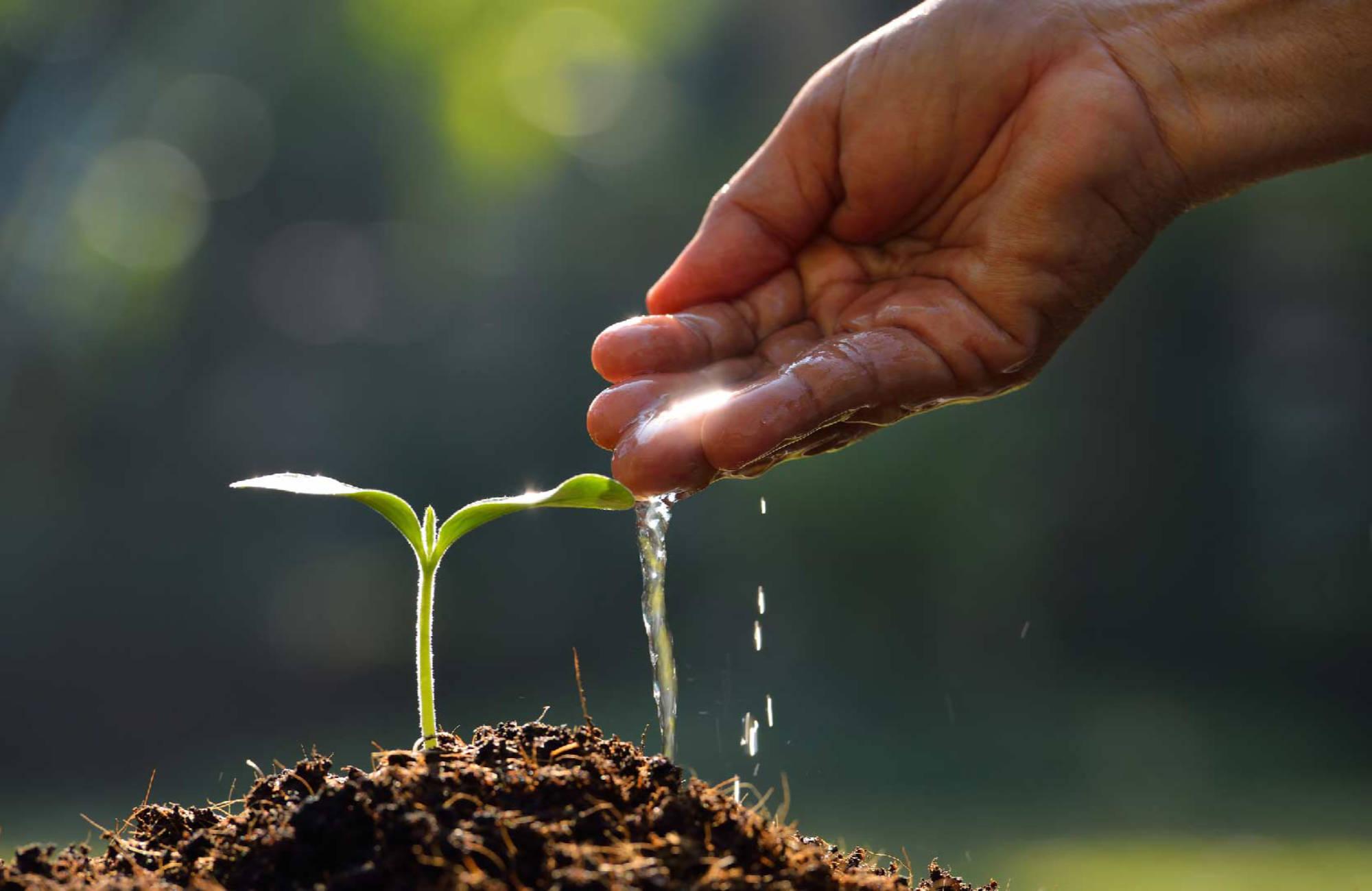 Faire un bonsai à partir d'une graine