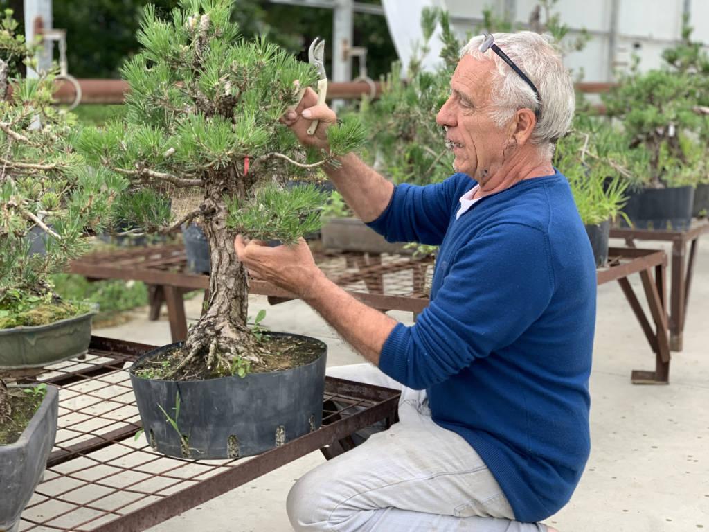 Jacques Galinou devant un pin noir du Japon