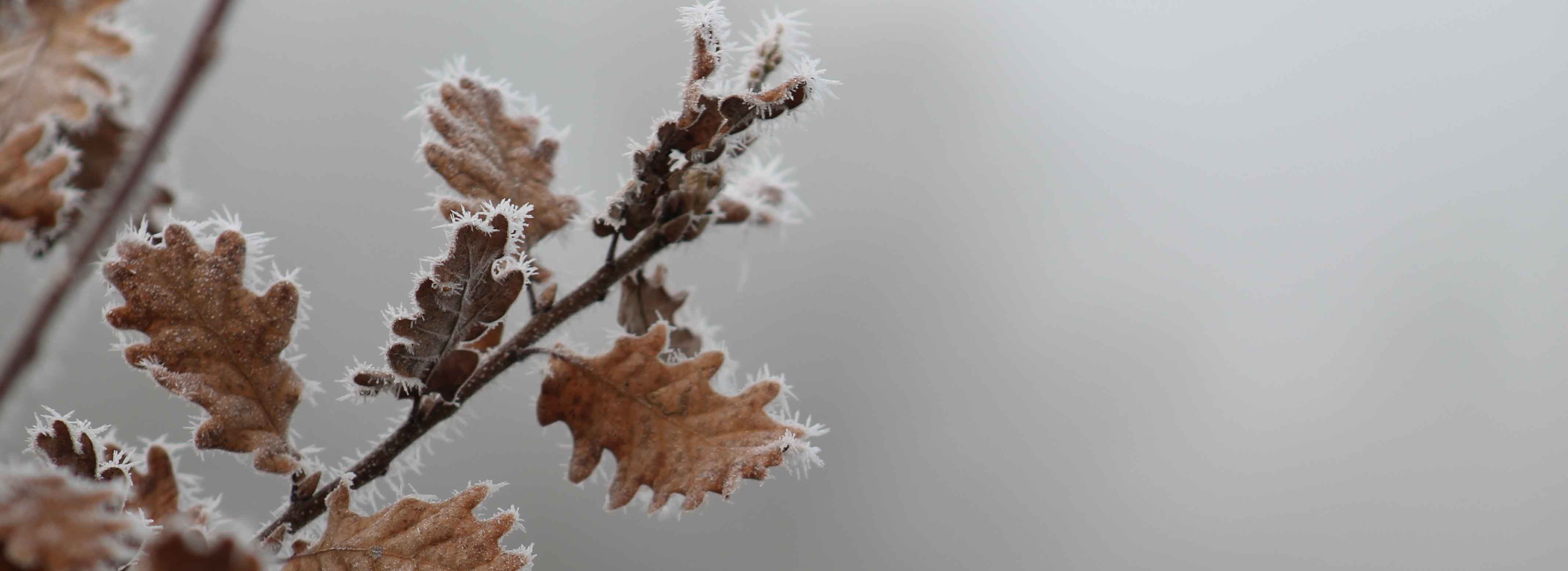 hiver 2